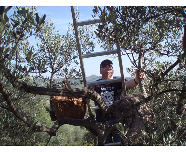 Aussie up a tree in Italy. and he's a pickin'