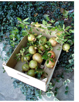box of italian pomegranates
