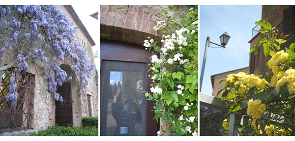 springtime in Siena, Tuscany and Panicale, Umbria